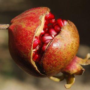 Les aphrodisiaques de A à Z : grenade