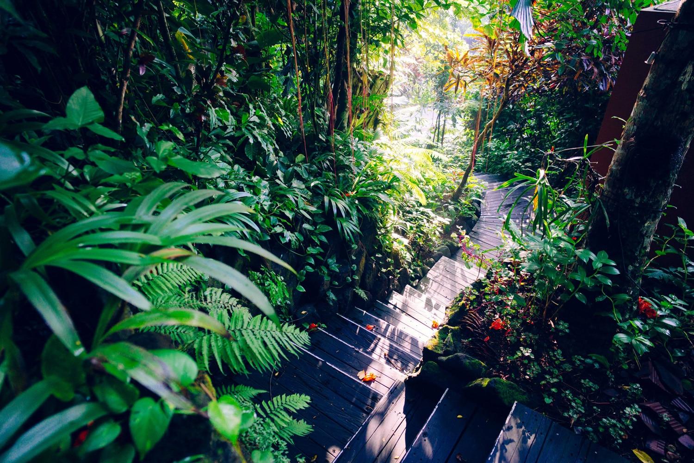 Shambali, forêt tropicale