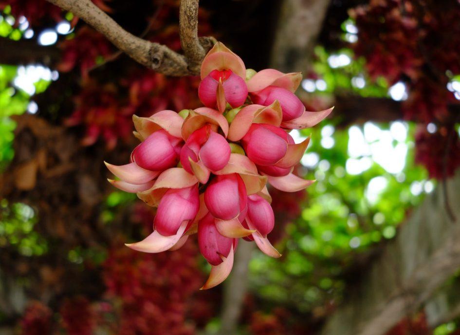 Libido, remèdes naturels
