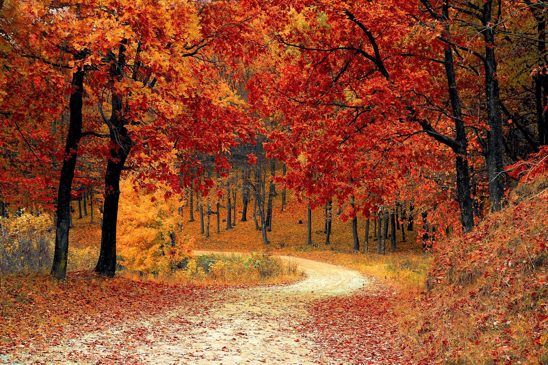 Le blues d'automne, c'est quoi ?
